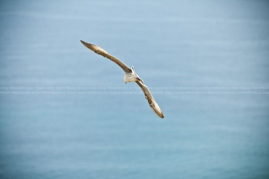 Полет чайки в Рыбачьем