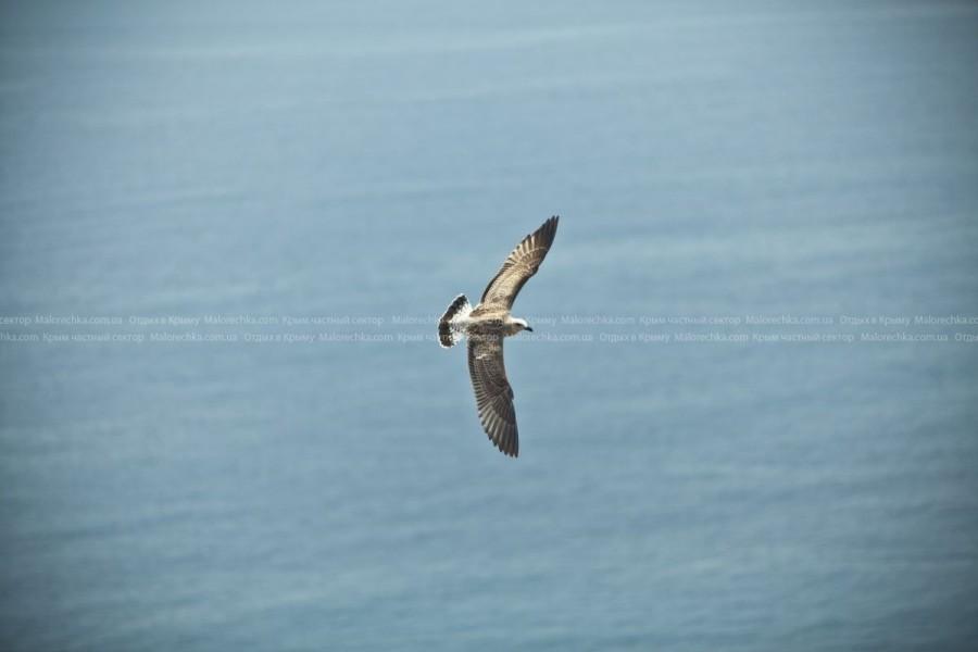 Летающая чайка в поселке Рыбачье