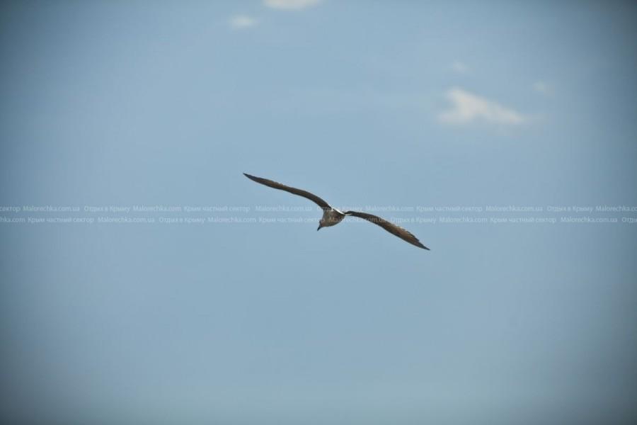 Чайка высоко в небе в Рыбачьем
