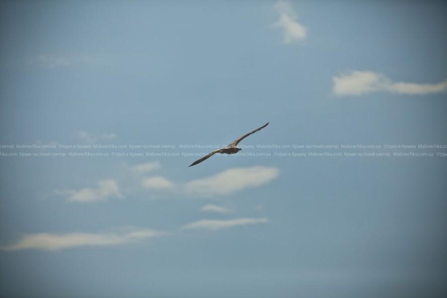 Чайка в полете в поселке Рыбачье
