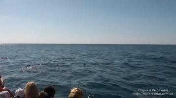 Увлекательная прогулка на катере в Рыбачьем