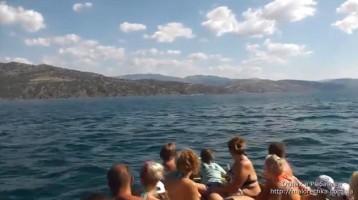 Экскурсия к дельфинам в Рыбачьем
