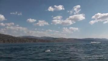 Наблюдение за дельфинами в поселке Рыбачье