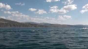 Дельфины в открытом море в Рыбачьем